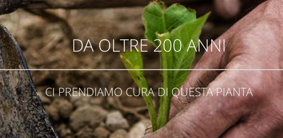 Da oltre 200 anni ci prendiamo cura di questa pianta